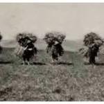 Campesinos cusqueños en actividades agrícolas