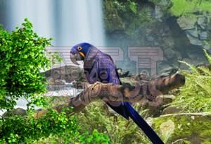 Animales de la Amazonía en Prezi