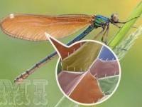 Así es el ala de una libélula