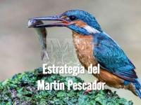 Estartegia para pescar del Martín Pescador